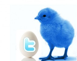 twitter-seguidores-posicionandotuweb
